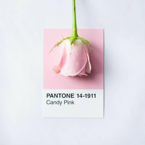 valentines-day-home-depot-pink-rose-paint