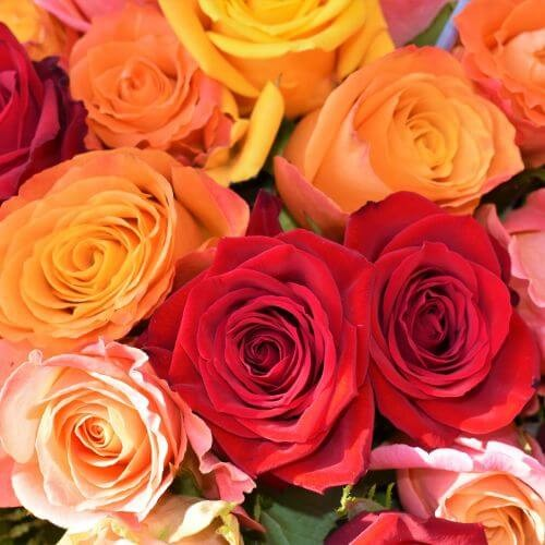valentines-day-proflowers-multi-colored-roses